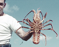 The Crabbers (1961)