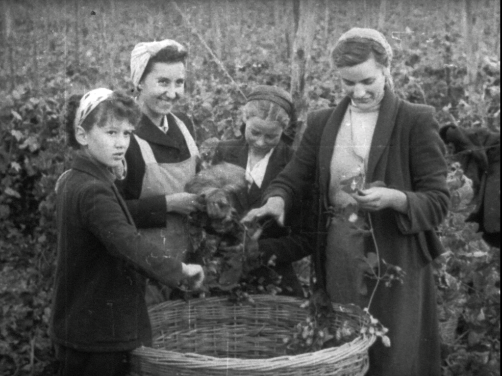 A black and white image showing two women and two children stood around a large basket stripping hop vines. The group are dressed in workers clothings and aprons.