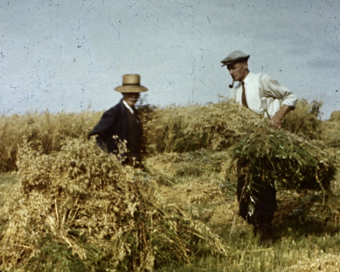 A still from 'Heronsdale Manor Harvest' (1942)
