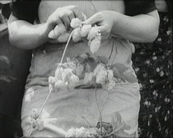 A still from [Kent Hop Farming Part 1] (1930s) showing hop picking