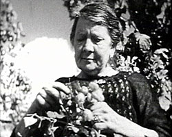 A still from 'In the Garden of England' (1938?) showing a woman hop picking