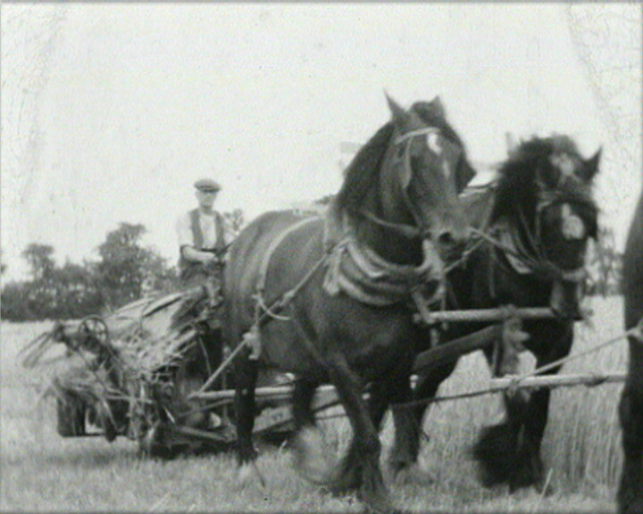 A still from [The Wheat Harvest] (ca. 1935)