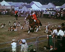 A colour still image taken from TID 11586, showing a wide view of the main agricultural show arena where a pair of mounted huntsman in red jackets and riding hats canter around the arena showing off a very large group of 20+ Basset hound hunting dogs. Spectators of all ages crowd the berries around the outside of the arena.