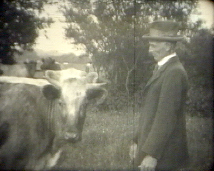 A still from [Hudsons Farm] (1936) - a man with a cow