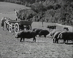 A still from [Elsted Manor Farms] (1932-1948)