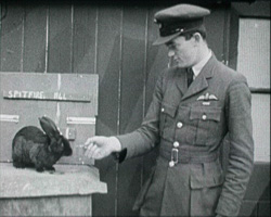 A still from [Pre-war and Wartime Scenes] (1937-1941?) showing Tony Gaze in RAF uniform feeding a rabit