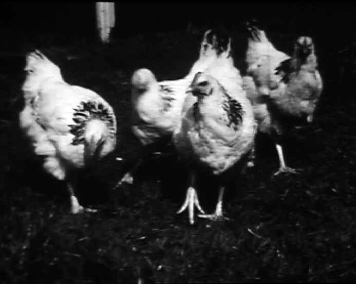 [Keeping Chickens. Susan's Wedding] (1935-1940)