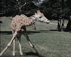 [Outing to Longleat Wildlife Park] (ca.1972)