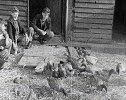 A still from 'The School Farm' (1949) showing school boys on the farm