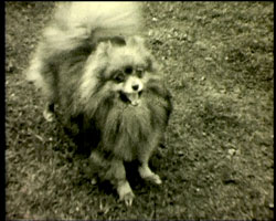 A still from [Dogs] [ca. 1937]