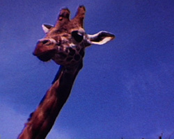 A Still from [Fairground; Zoo] (ca.1973)