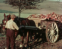 A still from [Sow and Piglets; Vegetable Crop Harvest] (1938)